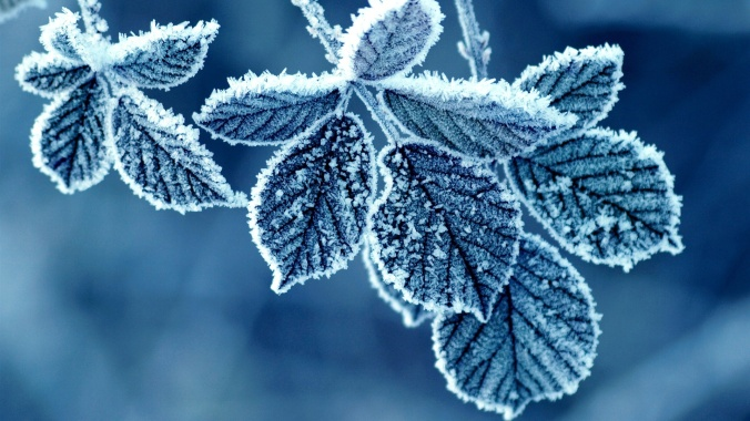 Frost-Leaves-1920x1080